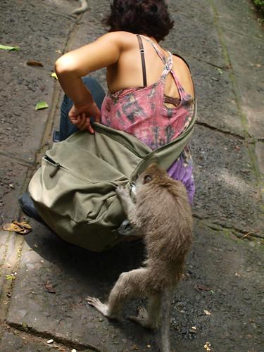 бали, обезьяны8