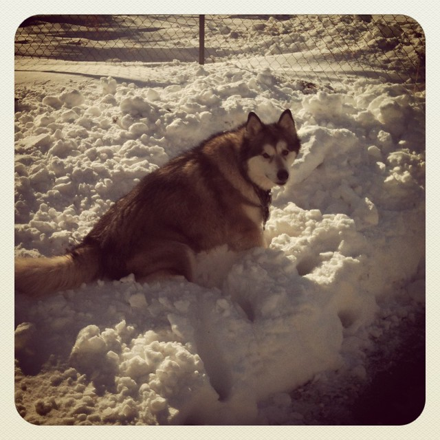 Luka in the snowbank
