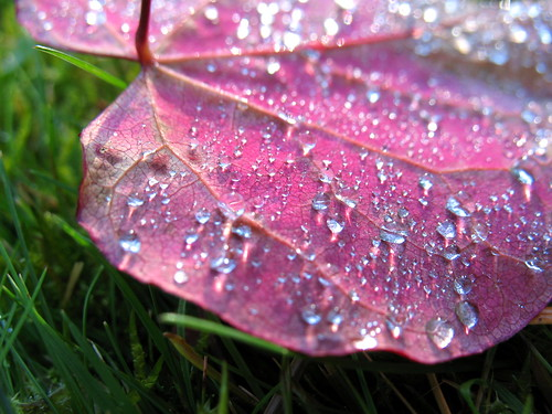 fall leaf dew