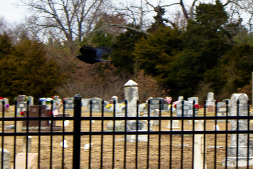 cemetery arkansas crow