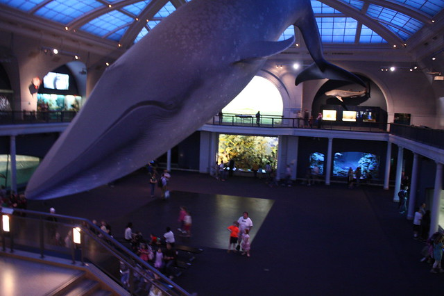 The Blue Whale-so iconic, so amazing