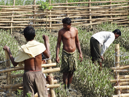 Farmers monitoring Mangrove growth at Naupal Nursery