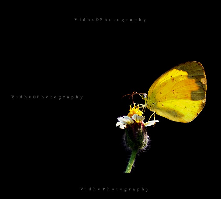 Low key image of a yellow butterfly