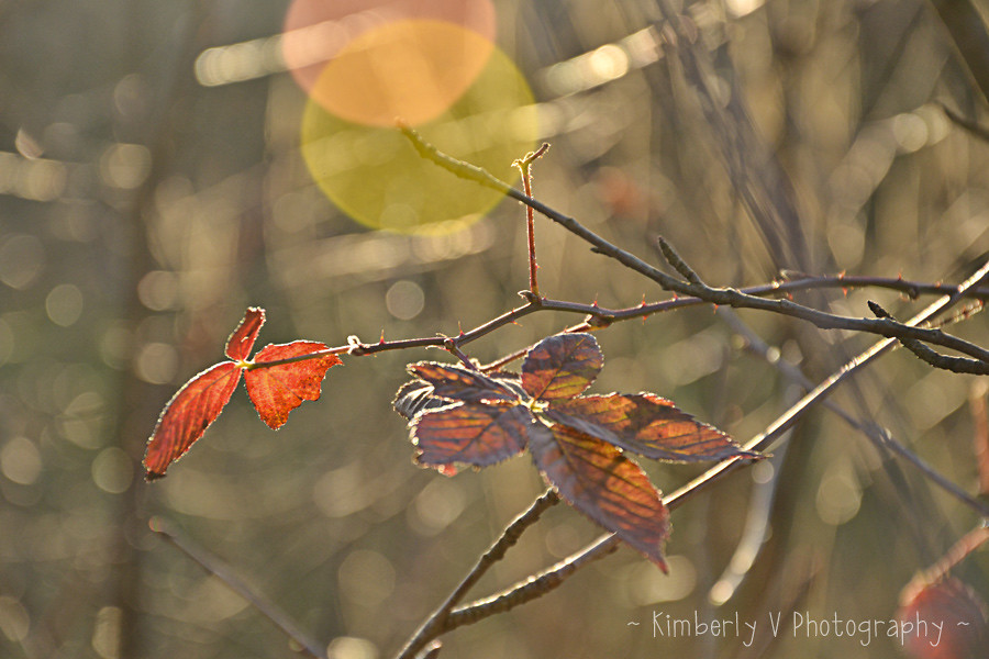 Last few leaves