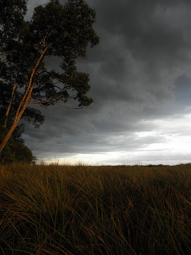 big storm approaches over the savanna