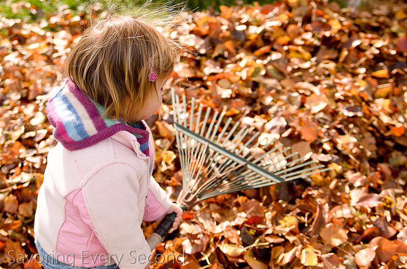 Fall Leaves28-Edit.jpg