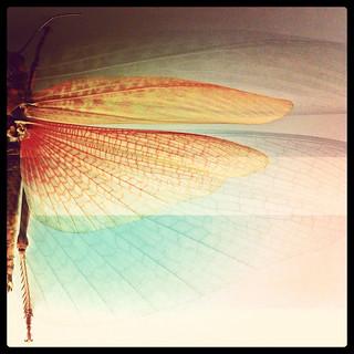 [iPhone] Locust