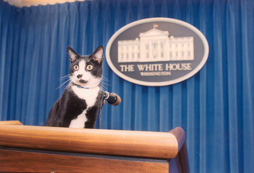 Photograph of Socks the Cat Standing on the Press Podium in the Press Room at the White House: 12/05/1993