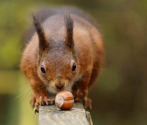 The Last Hazelnut