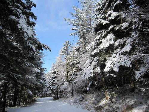 もみの木にも雪がたっぷり by Poran111