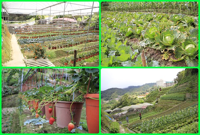 open terrace farming