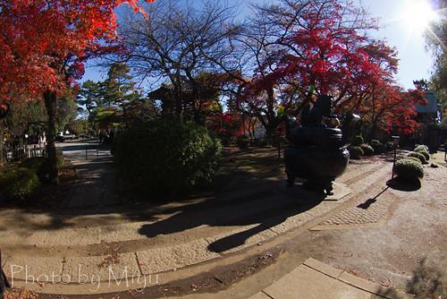 豪徳寺秋の長い影