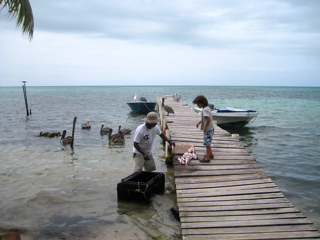 local fisherman on caye caulker belize