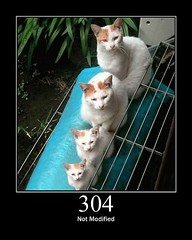 304 - Not Modified