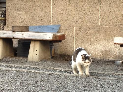 Cat in shrine