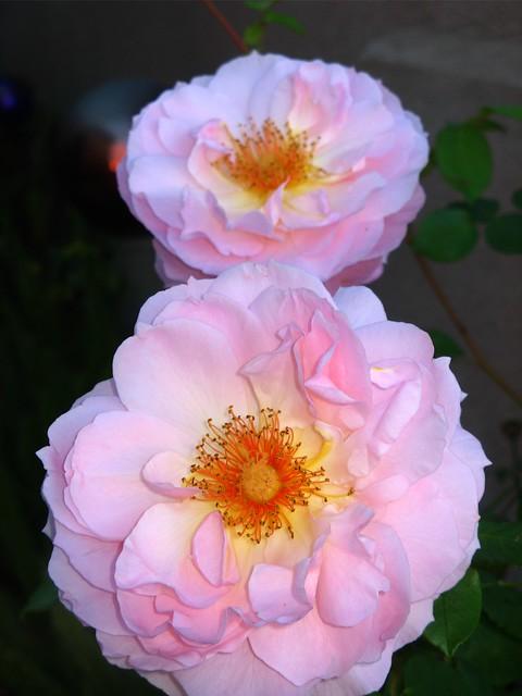 Rose Belle Story 02