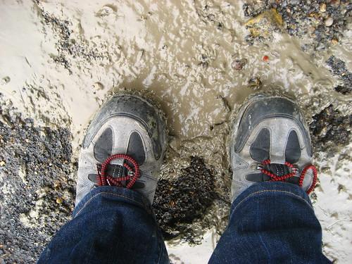 Estuary mud