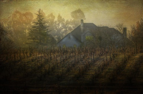 A misty wine country morn