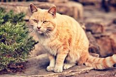[フリー画像素材] 動物 1, 猫・ネコ ID:201201130600