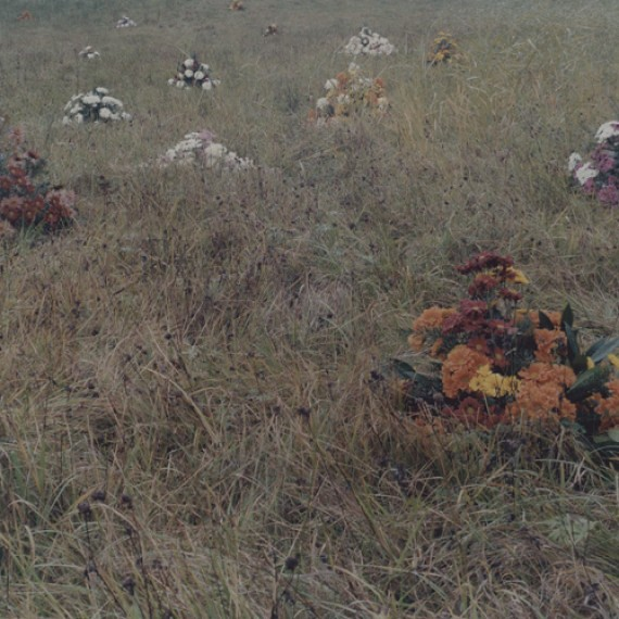amira-fritz-flowers-wild-field_thumb