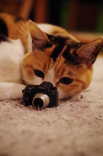 Shall I take a photograph?
