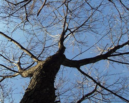 pse tree backyard 2