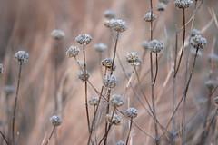 winter flowers 031