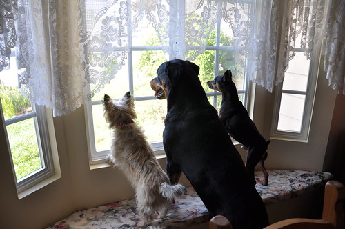 Waiting for their humans to come home.