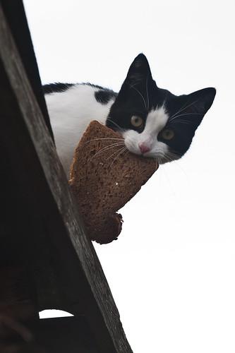 無料写真素材, 動物 , 猫・ネコ, パン