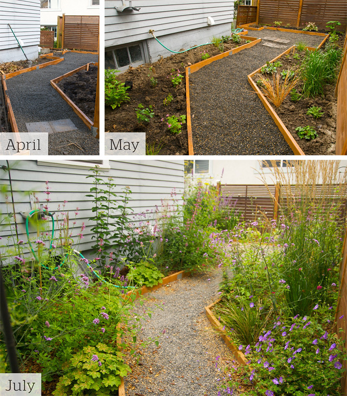 Backyard Landscaping Shows : Rhone street gardens backyard renovation part