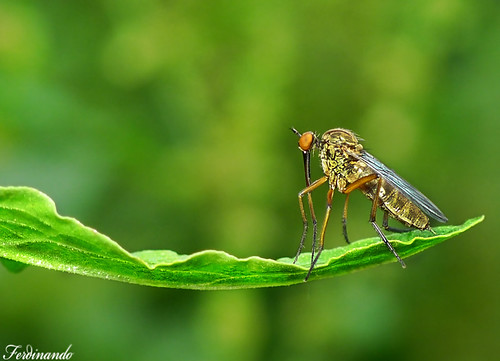 modeling on the catwalk-empis