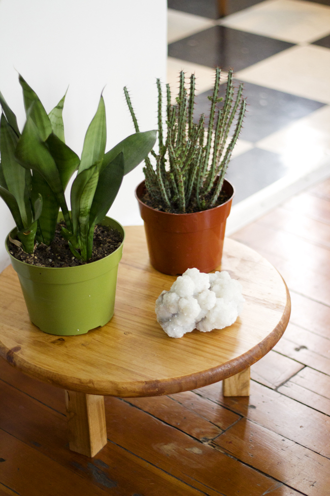little plant table