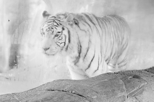 EmyAsh-zoo-edit-bw-7904-low