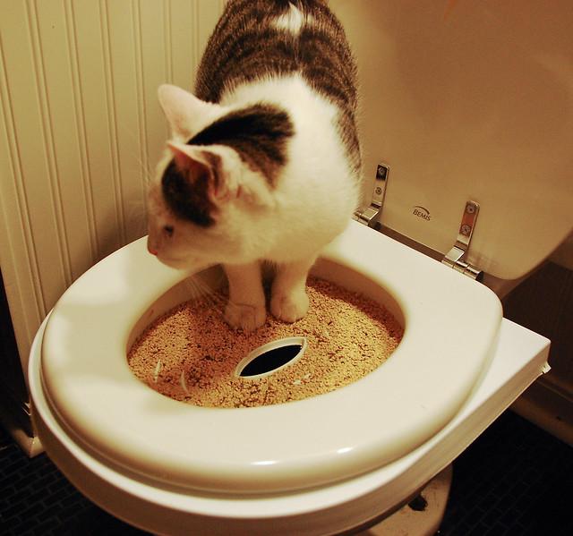 kitty toilet training phase 3  Flickr  Photo Sharing!