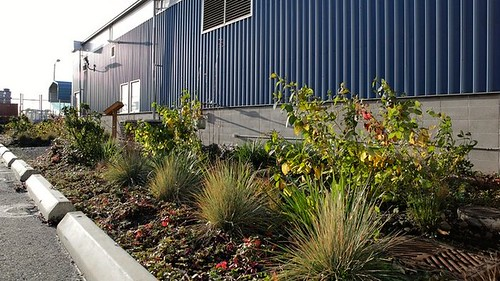 rain garden outside TOTE facility, Port of Tacoma (by: Katie Campbell via KUOW-FM)