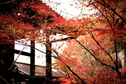モミジの永観堂 Autumn is all Enkando - 無料写真検索fotoq