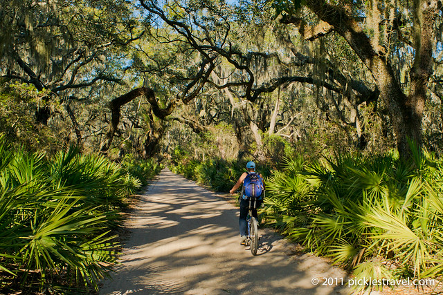 A Bike Ride on Cumberland Island