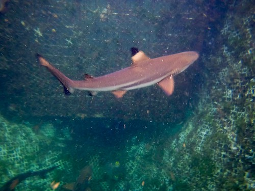 Indonesia - 10 best places on Earth to swim with sharks
