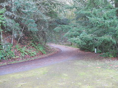 The road winds upgrade through evergreens and thickets of ferns