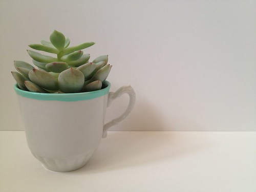 Custom Color Teacup Succulent and Table Number 14