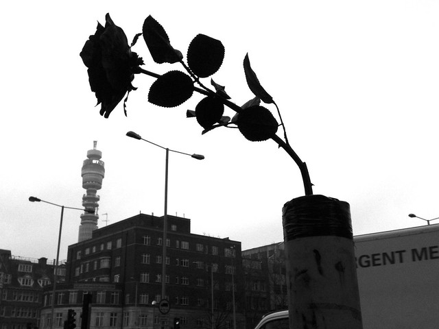 Euston Road Rose