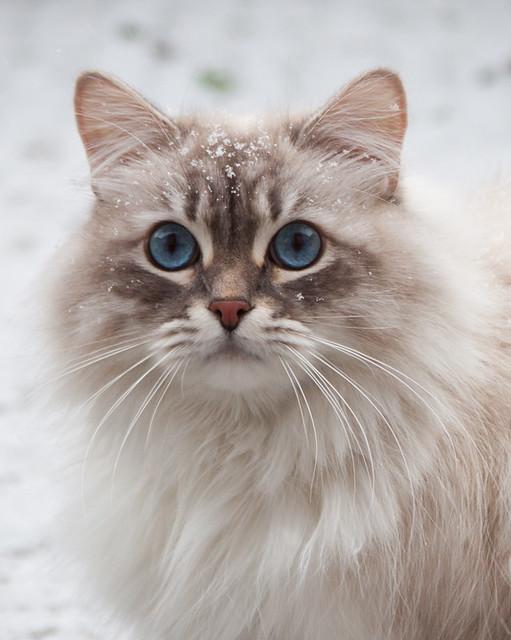 Darius in de sneeuw