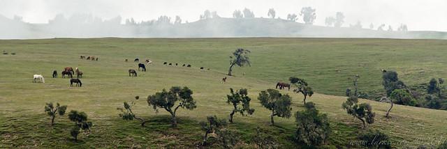 Horses Grazing, Simien Mountains National Park, Ethiopia