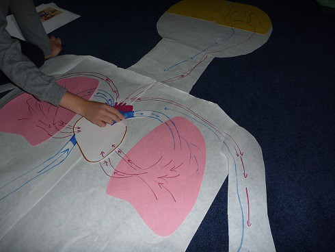Circulatory System Work (Photo from The Homeschool Den)