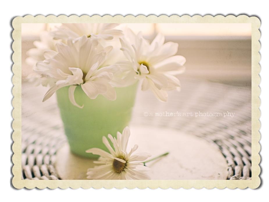 Daisies green vase vintage frame web
