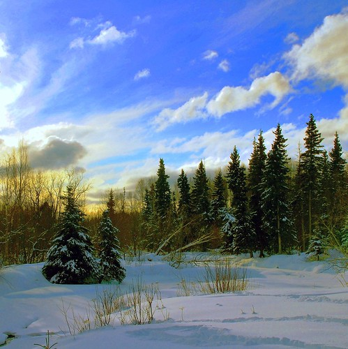Alaska Anchorage Winter Art by MarculescuEugenIancuD60Alaska