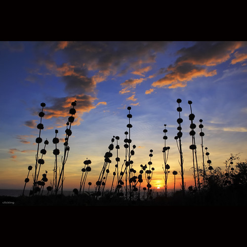 lighting light sunset sky sun sunlight nature beautiful grass sunshine silhouette clouds skyscape scenery colorful spectrum natural cloudy ngc down scene vietnam npc bluehour goodbye lovely grassy amazingsky hoànghôn phanthiết vietnameselandscape blinkagain bestofblinkwinners blinksuperstars goobyeday