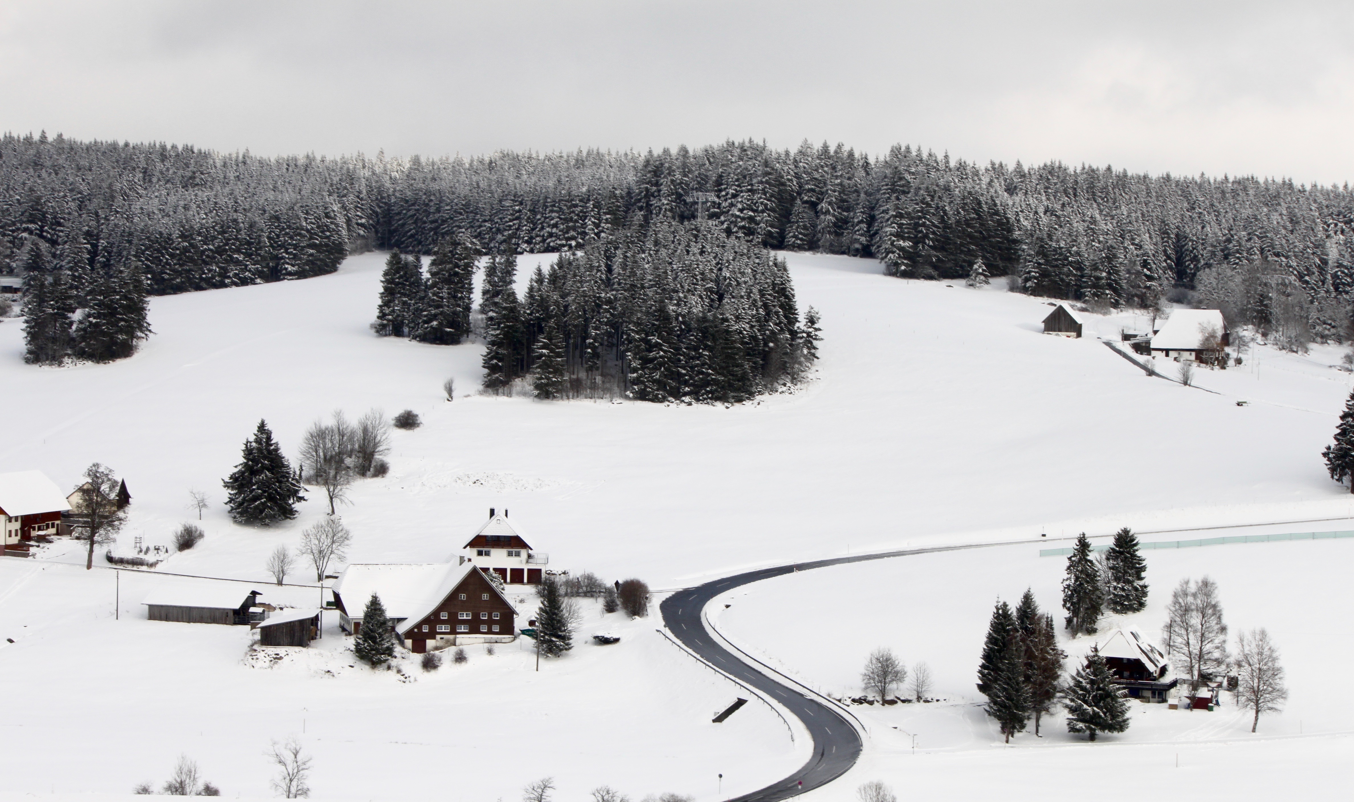 Nature photography challenge | Schwarzwald | www.hannahemilylane.com