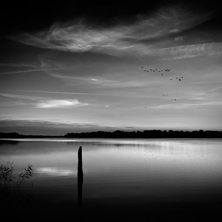 [ birds over the lake ]