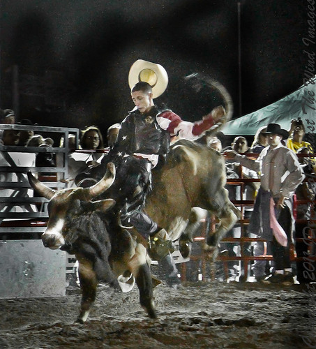 Bucking Bull-0130 by Against The Wind Images